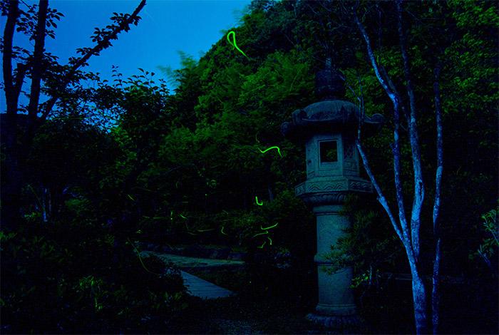 ホタル 6月 ゲンジボタル 会席料理 ビアガーデン ゆう月 綾部市 福知山市 舞鶴市