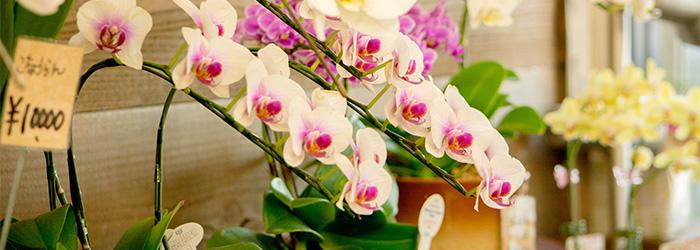 ゆう月 会席料理 懐石料理 お祝い 慶事 誕生日 綾部 舞鶴 福知山 京都 胡蝶蘭 花束 アレンジメント ゆいまーる