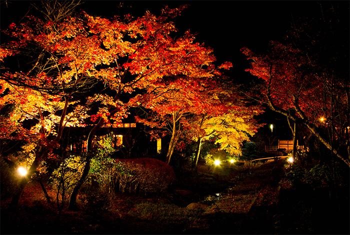 綾部 料亭 ゆう月 紅葉 紅葉狩り ライトアップ 夜景