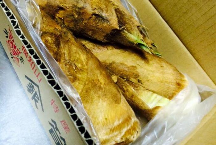 綾部の料亭ゆう月 筍の木の芽和え 報恩寺産筍