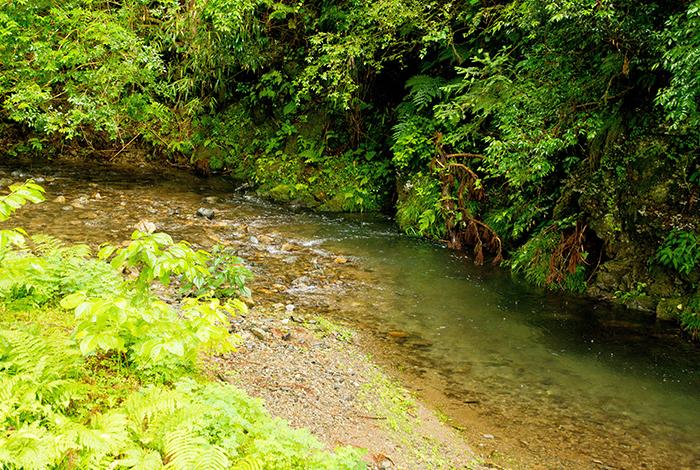 ゆう月の鮎の紹介 産地 由良川上流の美山川