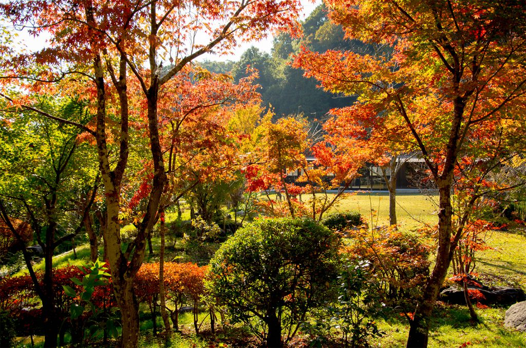 綾部の料亭ゆう月 秋の庭園 紅葉