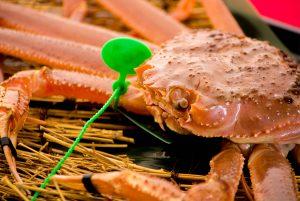 綾部の料亭 ゆう月 冬の食材 松葉がに ずわい蟹