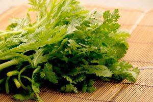 綾部の料亭 ゆう月 冬の食材 春菊 京野菜