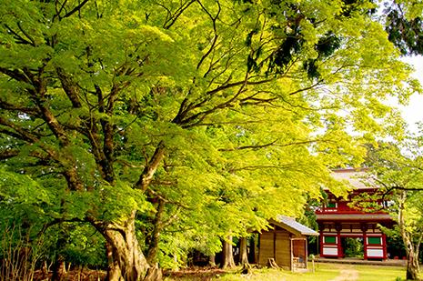 京都 ゆう月の周辺案内 観光案内 光明寺 仁王門 国宝 重要文化財 参道 もみじ 紅葉