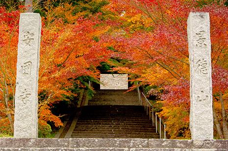 綾部 ゆう月の周辺案内 観光施設 寺院 足利尊氏生誕地の安国寺