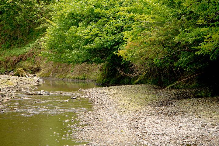 綾部むすびページの由良川の紹介画像