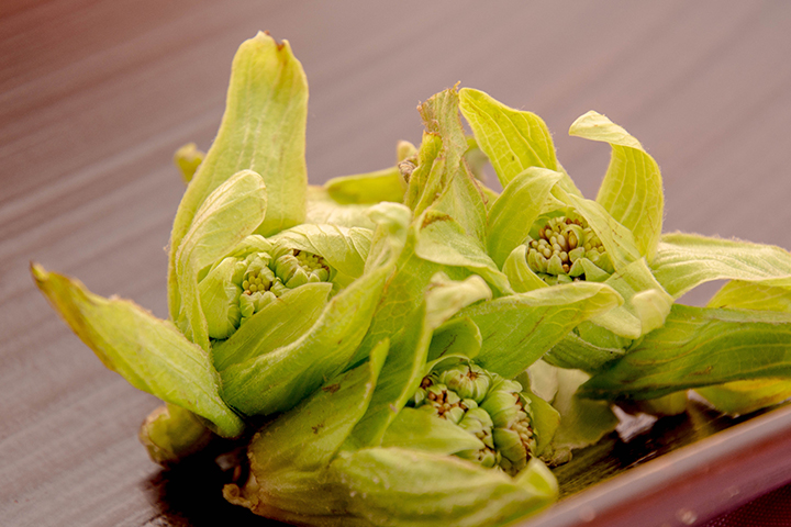 綾部の料亭 ゆう月 春の素材のページ 山菜 ふきのとう