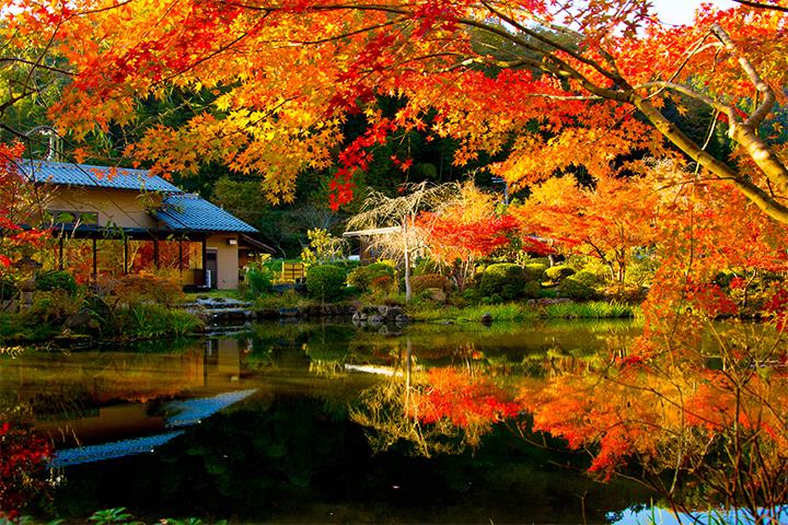 綾部の料亭 ゆう月 ギャラリページ秋のサムネイル