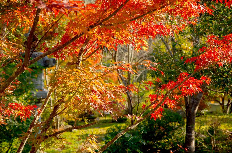 綾部の料亭 ゆう月 秋の庭園風景 紅葉