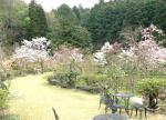 ゆう月 庭園