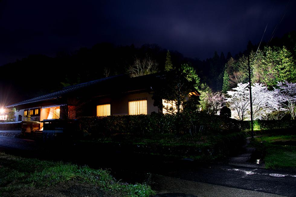 桜の庭園 日本庭園 桜景色 料亭