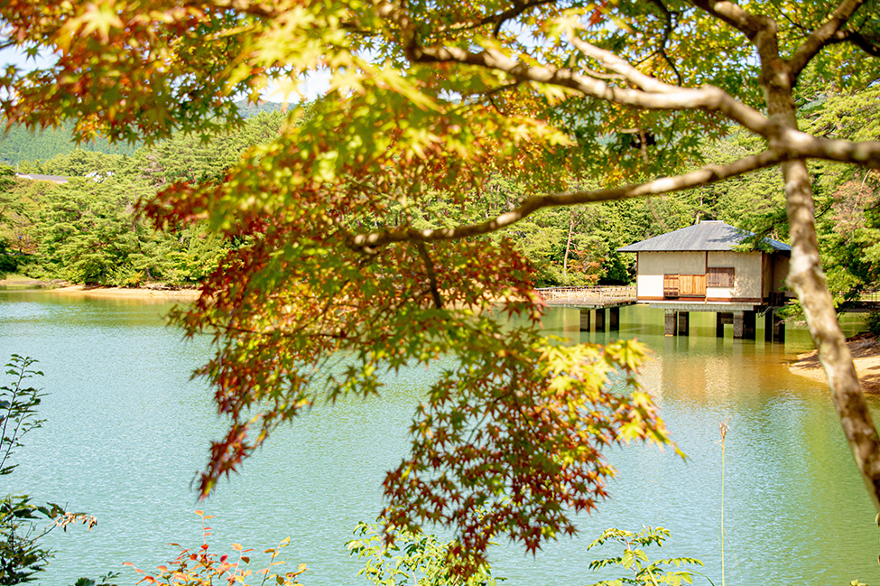 綾部 ゆう月周辺の観光施設 三段池公園 紅葉 松 こも巻き