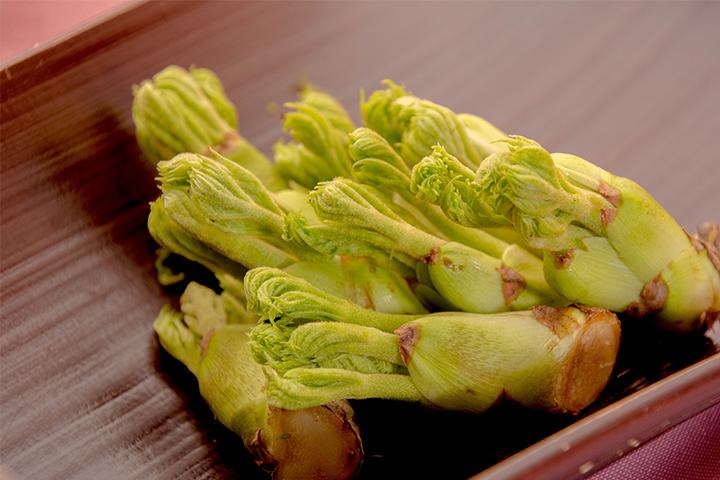 綾部の料亭 ゆう月 春の素材のページ 山菜 タラの芽