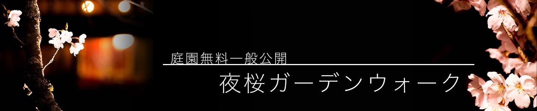 綾部の料亭 ゆう月 庭園の夜桜ライトアップ 一般公開